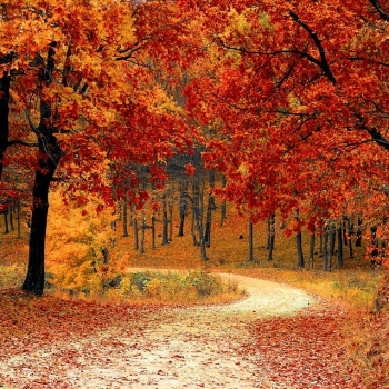Haiku Poems About The Beauty Of Fall