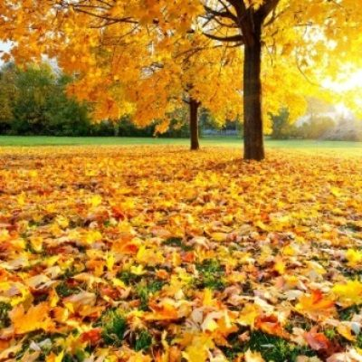 Good Fall Poems