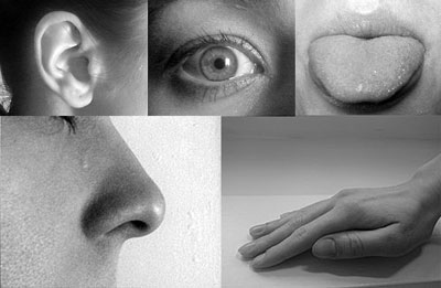 5 Senses Taste, touch, sight, smell, and hearing